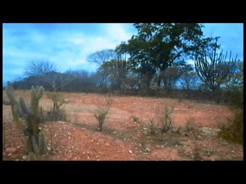 Capítulo II - Manejo Florestal