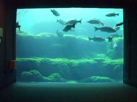 the flint riverquarium albany ga digupstuff youtube