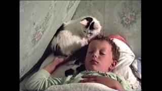 Как кошка выбирает лучшее место для себя и котёнка.