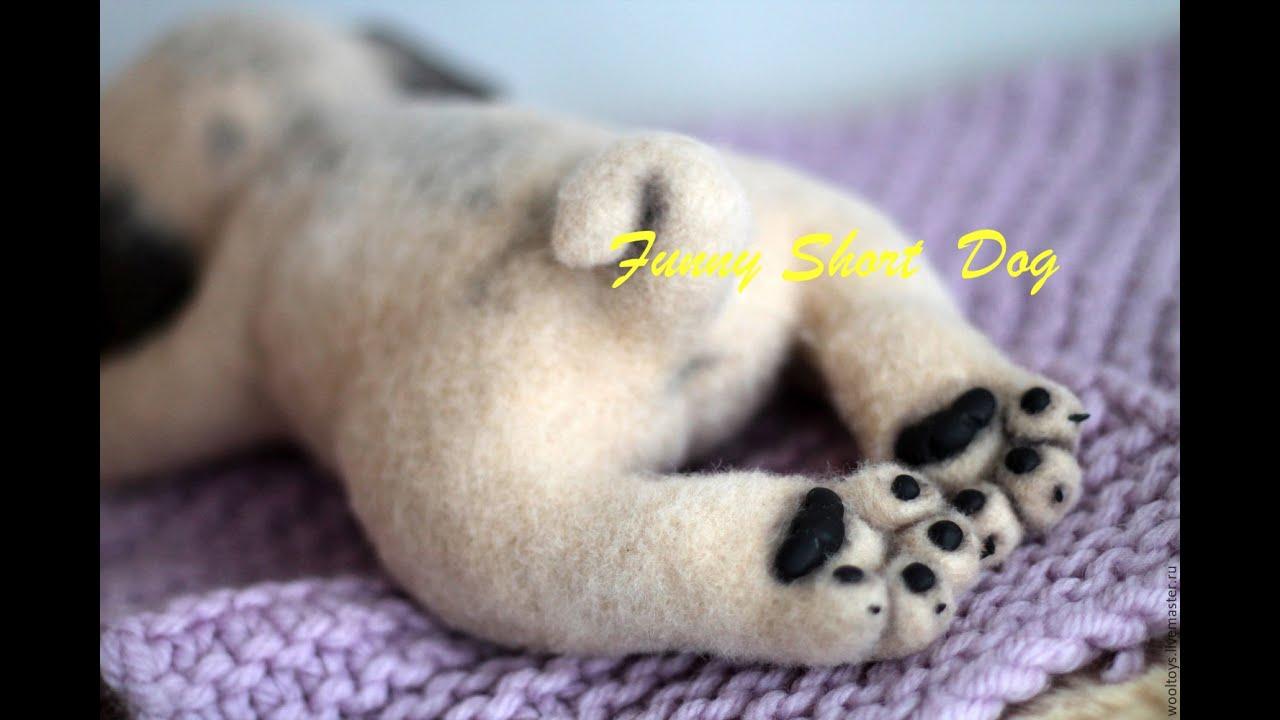 щенок мопса открывает глазки - YouTube
