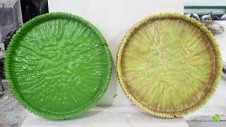 Полиуретановая мастика ручного нанесения Ecotermix VS Полимочевина Ecotermix. Тест
