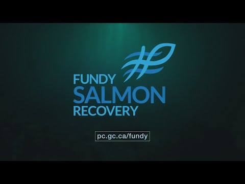 Fundy Salmon