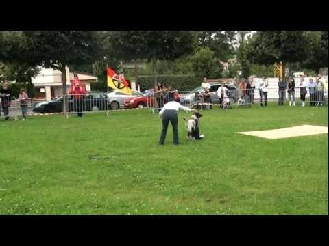Le cheval clown - spectacle avec Kasper son pote le chien