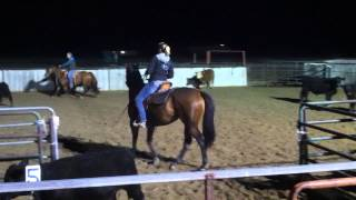 Team Sorting Oct. 2013 - FOR SALE - Symphonic Cat - 2009 Thoroughbred Gelding (OTTB)