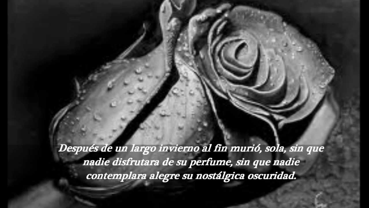Parte Superior Imagenes De Rosas Negras Con Frases De Amor Mejor