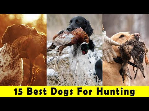 15 Best Dogs For Hunting | Dog Is World