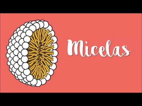 meta-6.2:-digestion,-absorcion-y-transporte-de-lipidos,-video