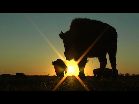 White Buffalo: An American Prophecy Trailer 2017