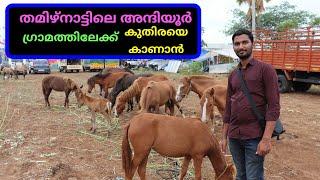 കുതിരയെ കാണാൻ അന്ദിയൂരിലേക്ക്|  a journey in to anthiyur horse market|agri tech farming|tn travel