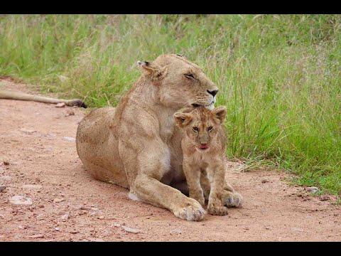 🌍 Maasai Mara Safari: Kenya's Best Game Park (Travel Documentary) |