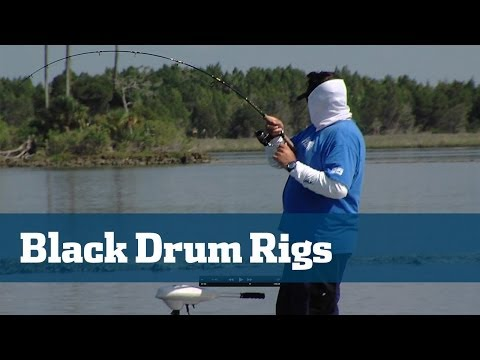 Florida Sport Fishing TV Black Drum; Best Black Drum Rigs