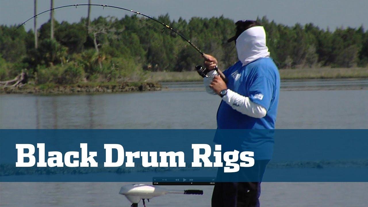 Black drum best black drum rigs florida sport fishing for Drum fishing rigs