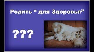 Надо ли собаке рожать?