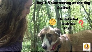 I volunteered at the dog shelter today, heres how it went!