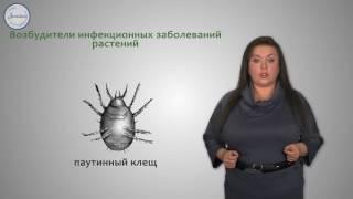 Биология 7 Класс. Паукообразные