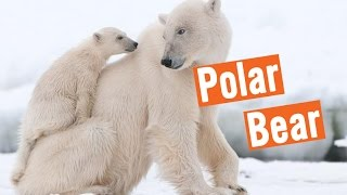 Discovery Education Kids - Polar Bears Rescue 2016