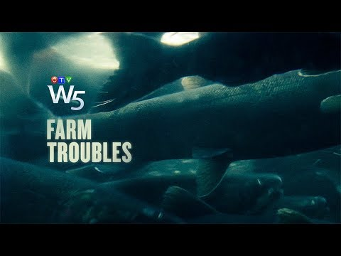 W5: Are fish farms pushing salmon towards extinction?