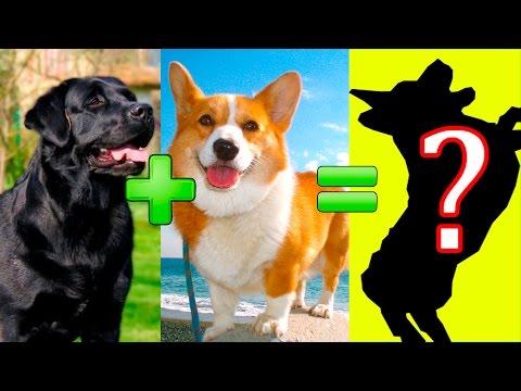 15 UNBELIEVABLE CUTE CROSS BREED DOGS PT. 2