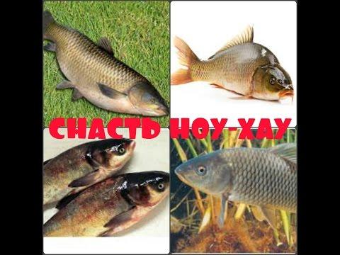 новая прикормка для рыбы