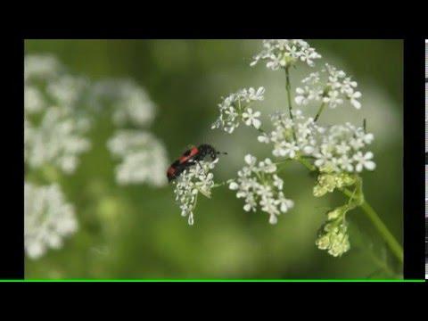 фото с цветами жасмина