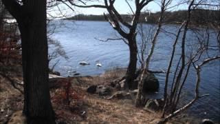 Swanee River Boogie - Dr. John