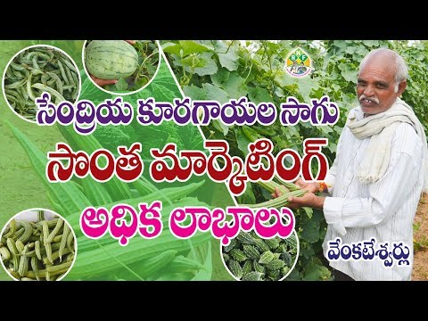 Organic Vegetable Farming || Venkateshwarlu || Contact - 7702710588