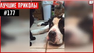 ПРИКОЛЫ 2017 Ноябрь #177 ржака до слез угар прикол - ПРИКОЛЮХА