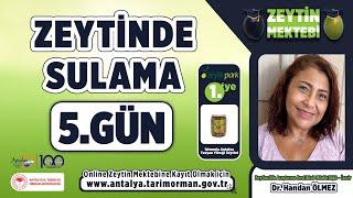 Zeytin Mektebi - Zeytinde Sulama 5.Gün