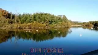 (378)武士道Bushido100「武士道ルネサンス」 「半藤一利×池上彰 歴史探...