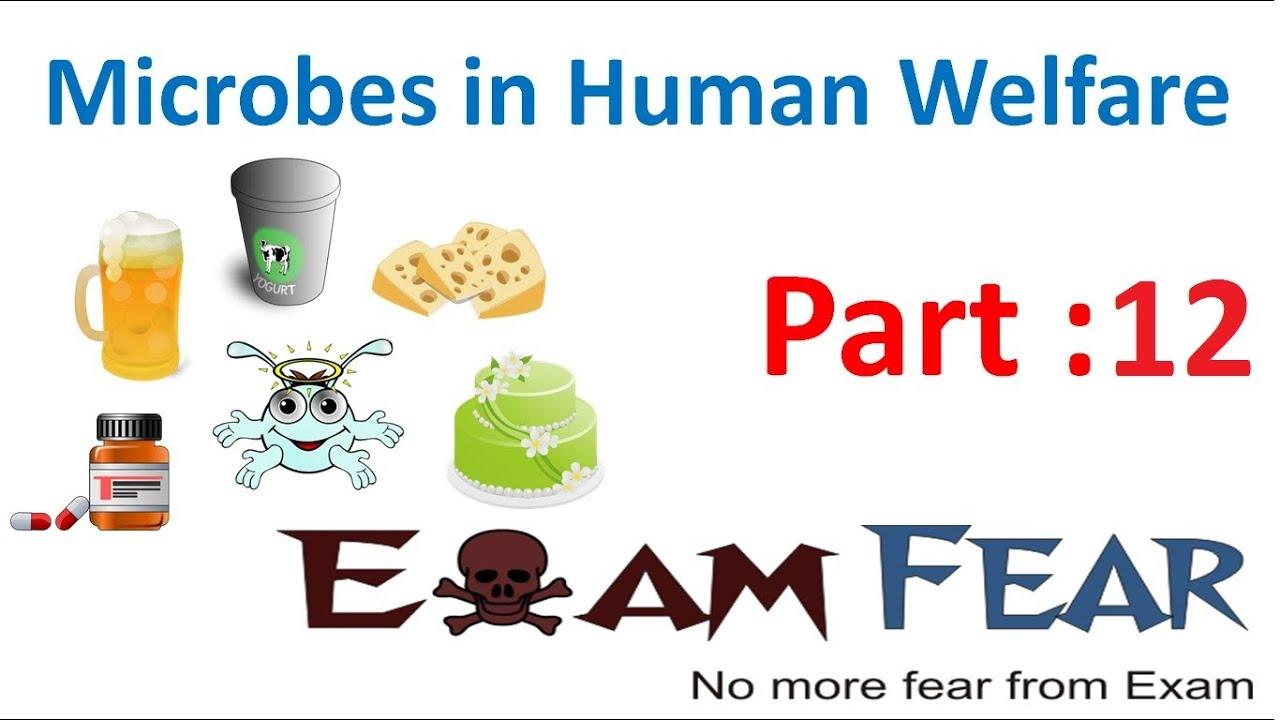 biology microbes in human welfare part 12 biogas plant. Black Bedroom Furniture Sets. Home Design Ideas