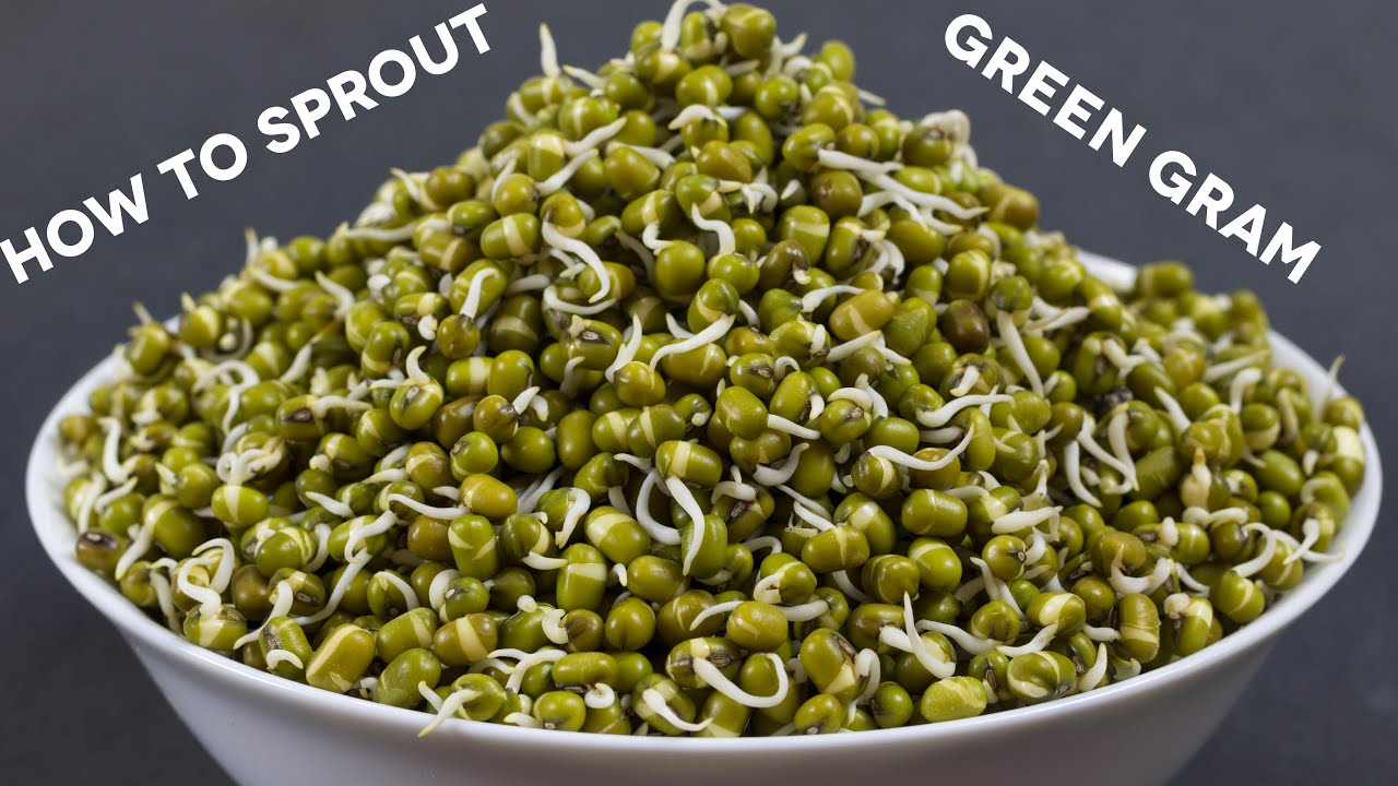 How to Sprout Green Gram How to Sprout Green Gram new pics