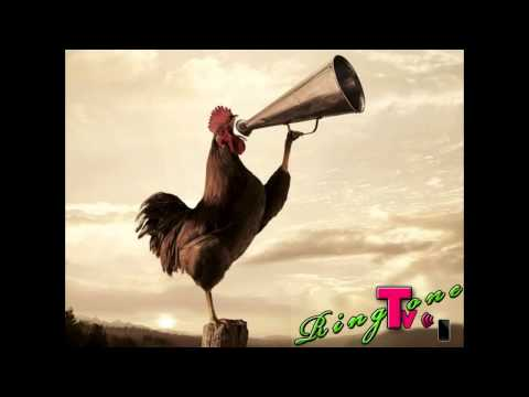 Morning Rooster Sound - Ringtone