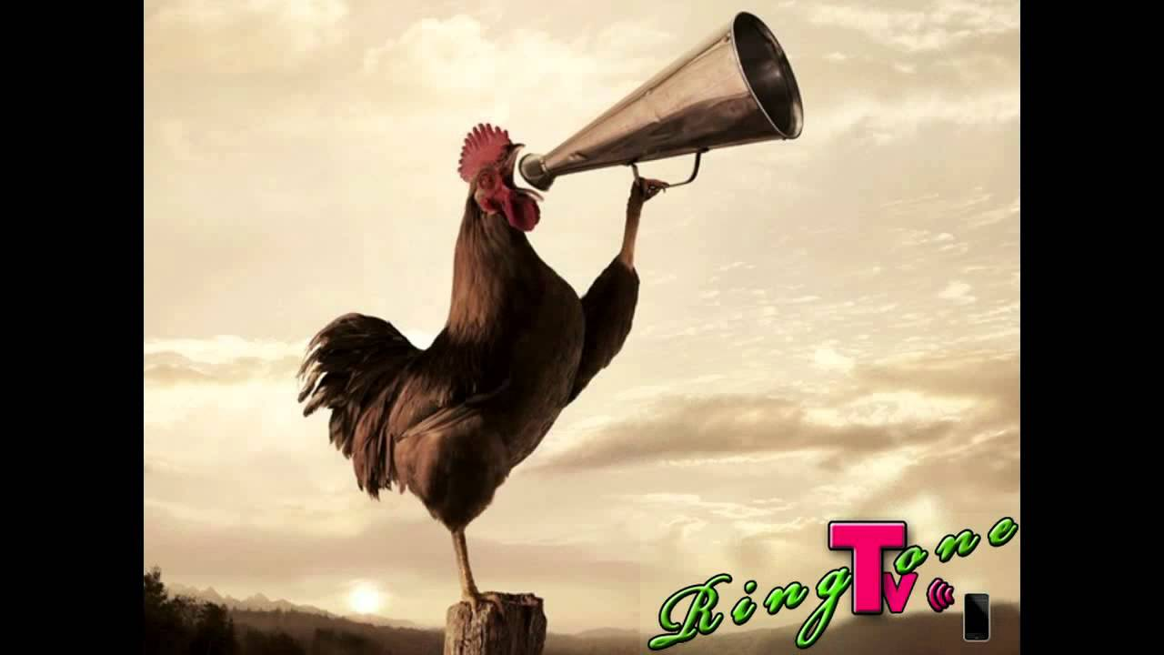 Rooster Crowing Sound Effect Mp3 Free Download - namexsonar