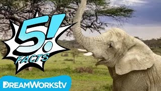 5 facts about elephants that will blow your mind   5 facts