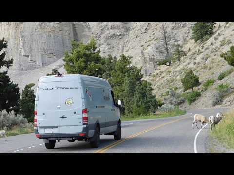 Sewerin van almost hits baby bighorn sheep in Yellowstone 2019-08-12