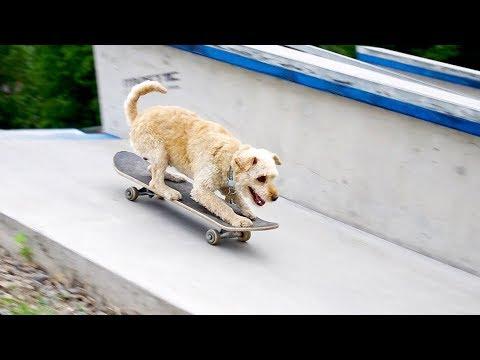 AMAZING dog tricks by Jade  [4 years]