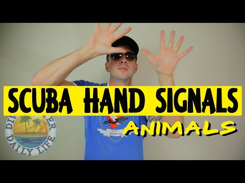 scuba-hand-signals-for-marine-life-–-animals