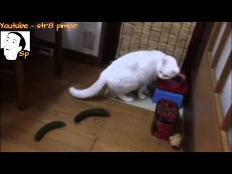 Cats scared by cucumbers