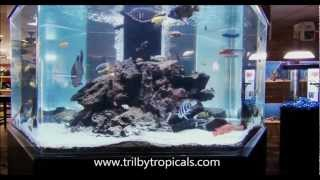 600 Gallon Hexagon African Cichlid Tank, All Sides, 3/15/2012, Hd Video