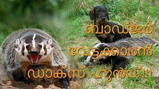 Dachshund (Badger Dog) | Meet the Dog  ഡാക്സ് ഹുണ്ട്