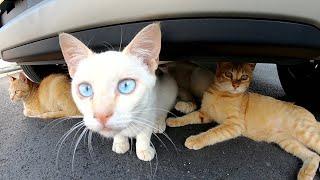 猫バンバン宜しくね!車の下を覗いたら猫達が集会を開いていた