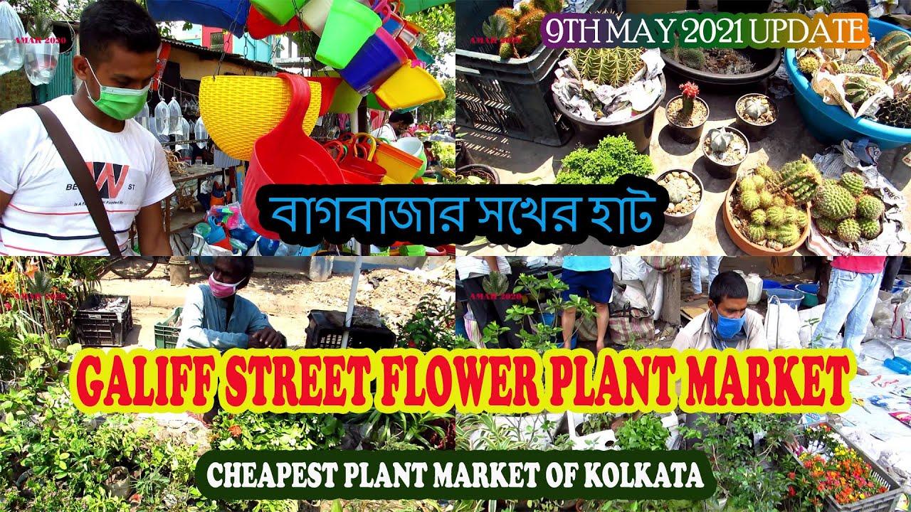 GALIFF STREET CHEAPEST FLOWER PLANT MARKET OF KOLKATA WEST BENGAL INDIA | 9TH MAY 2021 VISIT