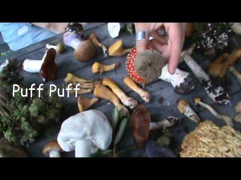 National Audubon Society Field Guide To Mushrooms
