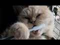 TRY TO SURVIVE THIS LAUGHING CHALLENGE - Ultimate FUNNY ANIMAL videos