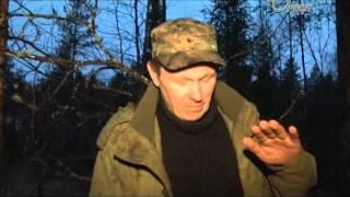 в сланцевском лесу найдены шпринг мины