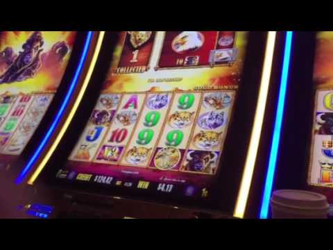 Buffalo Gold Slot Machine Free Spin Bonus #3 Treasure Island Casino Las Vegas
