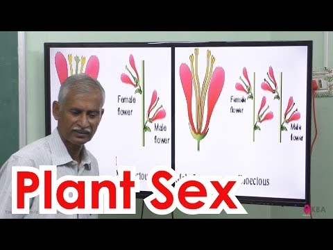 16.Botany | Reproductive Morphology | Plant sex