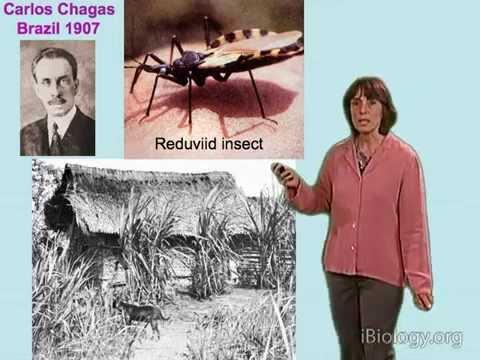 Norma Andrews (U. Maryland) Part 1: Trypanosoma cruzi and Chagas' Disease