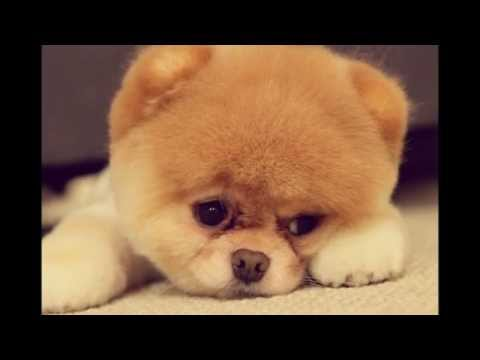 Top 5 Most Beautiful Dog Breeds in the World Ever