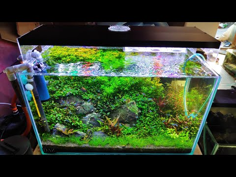 #97-membuat-aquascape-tema-natural-60cm-part-2-||-bercocok-tanam-di-aquarium-||